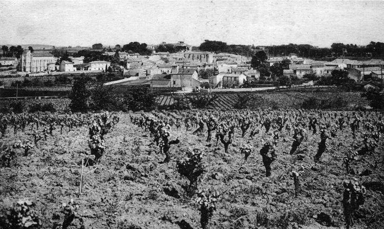 CELLENEUVE 1936 VITICULTURE DU LANGUEDOC